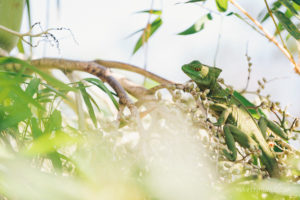Tree lizard nature photography