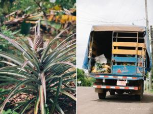 pineapple plant shot by Toronto photographer